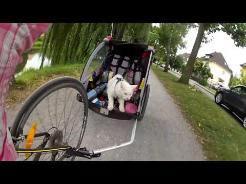 BIKE TOURING WITH A CAT