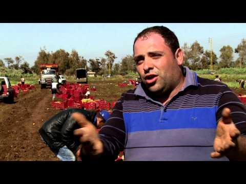 ILO helps Lebanese farming communities hosting Syrian refugees