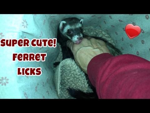 Super Cute! Ferret Licks - Our Other Adorable Pets 2 - VOL. 38