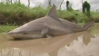 """Zyklon: """"Debbie"""" weht sogar einen Bullenhai auf die Straße"""