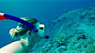 FREE DIVING WITH SHARKS!!!!