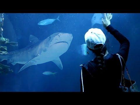 SHARKS IN CHICAGO! (Shedd Aquarium)