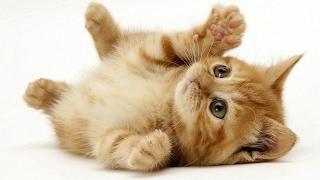 有趣可愛貓咪影片-貓咪隱身之術!