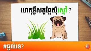 ហេតុអ្វីសត្វឆ្កែស៊ីស្មៅ Why do dogs eat grass - DOLTEACH