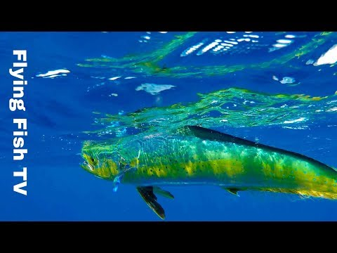 How NOT To Fish From A Kayak | Kayak Fishing Hawaii | Flying Fish TV