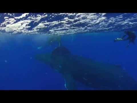 Schoener Tauchen: Schnorcheln mit verspielten Buckelwalen in Tonga