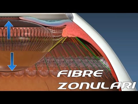 Zonular Fibers : Accomodation [ Sub - ENG ] - Anatomy and Histology part 1