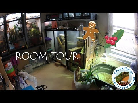 A tour of the Lizard Room!