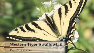 Down To Earth - Butterfly Plants