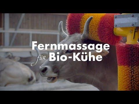 Bio Suisse - Fernmassage für Bio-Kühe (Case Study)
