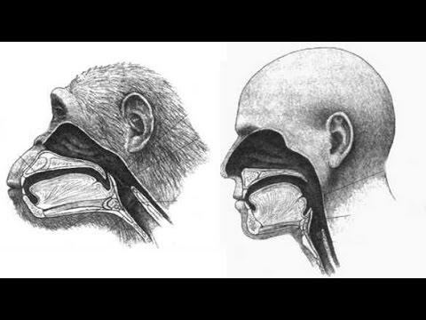Evolucion Quimica y Biologica ¿cómo la Evolución Biológica