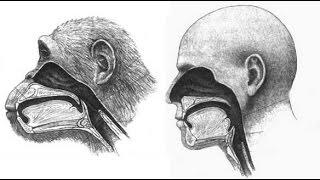 ¿CÓMO LA EVOLUCIÓN BIOLÓGICA DESARROLLÓ LA MENTE HUMANA? MENTE Y EVOLUCIÓN