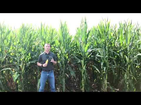 DKC60-80VT2PRIB - Top end yield and agronomics for a full season hybrid