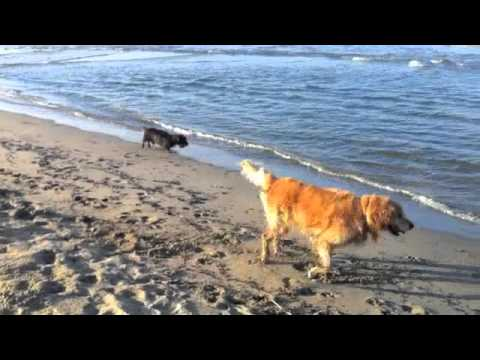 Cani al mare youtube for Cani al mare