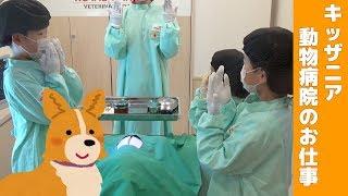 キッザニア 動物病院のお仕事 せんももあい Kidzania Tokyo Animal Hospital 2018