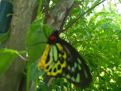 Fort Lauderdale Butterfly 3