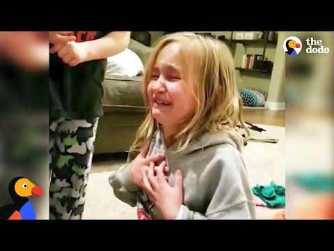 Little Girl Reacts To Her New Rescue Dog | The Dodo
