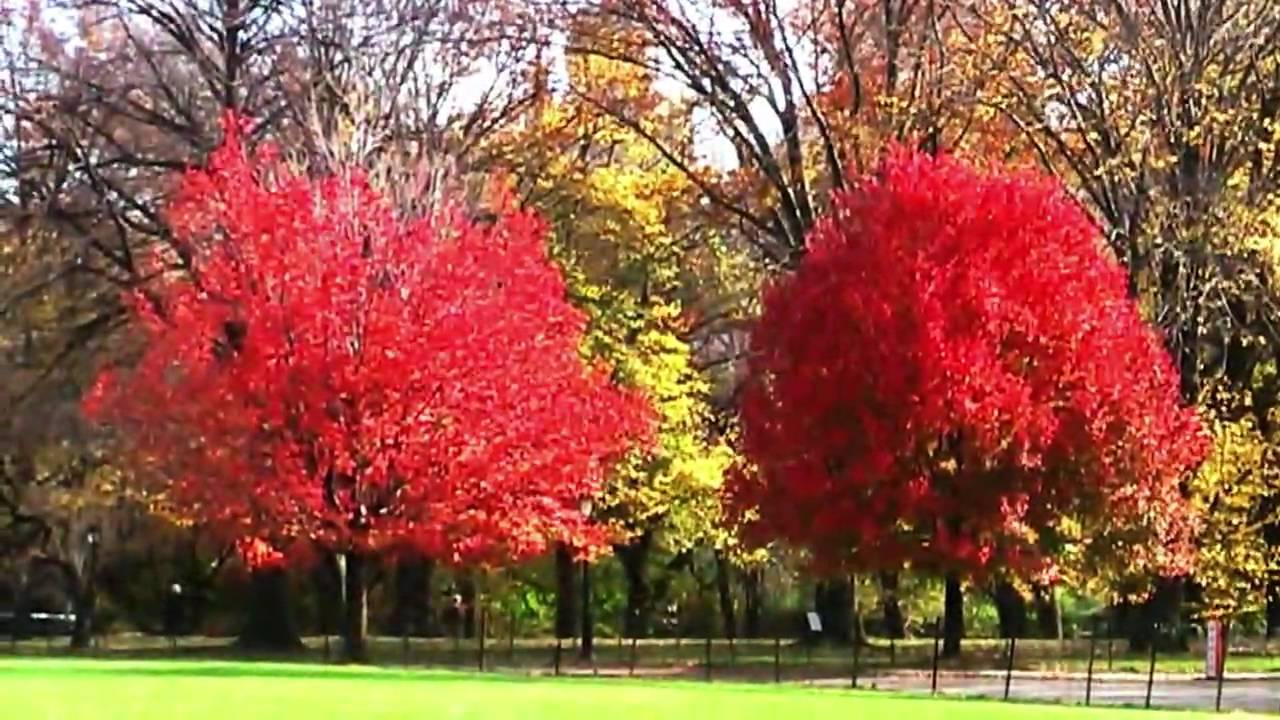Fall Colors Wallpaper Central Park Fall Foliage 2009 Hd Youtube