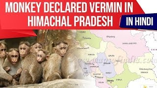 Monkey declared Vermin in Himachal Pradesh, Rise in Human Wildlife conflict, Current Affairs 2019