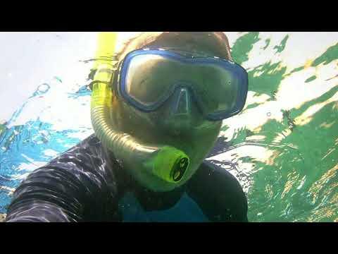 Egypt Hurghada Sea Gull