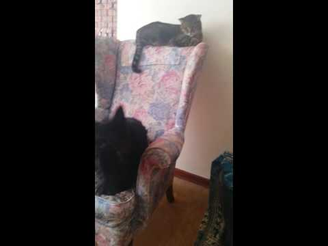 Pets learning to live together.