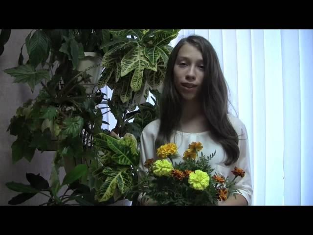 Алла Палагина читает произведение «Полевые цветы» (Бунин Иван Алексеевич)