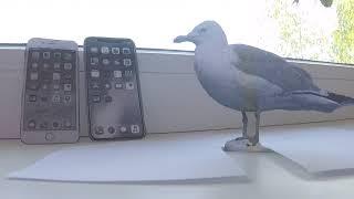 Сравнение iPhone 8 и iPhone X от Бумажной Чайки/from Paper Gull/Apple/2017/2018