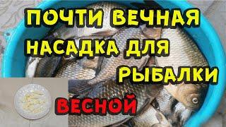 Почти вечная насадка для рыбалки весной