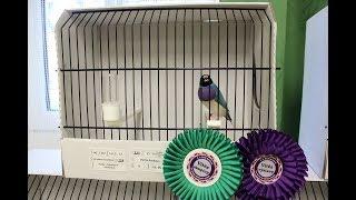 Выставка птиц в Чехии. Exhibition of exotic birds. Czech Nymburk