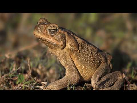 Download Youtube: 10 Intelligent Creatures That Are Evolving To The Modern World