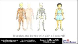 Muscles and Bones with Skin All Around