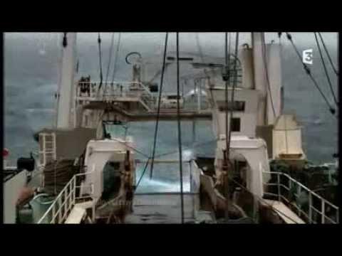 """Reportage Thalassa - France 3 - MOLECULE """"Tempête de sons"""""""