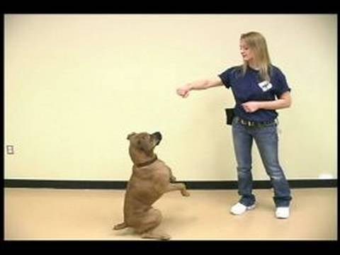 Dog Tricks : Sitting Pretty Dog Trick