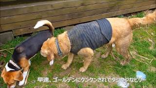 大和高原にある、月に一週間しかやっていないドッグラン「銀木犀」へ行...
