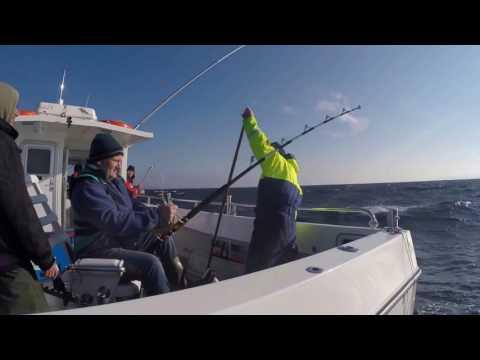 Bluefin Tuna, Oct 2016 Big Game Fishing, Donegal, Ireland.