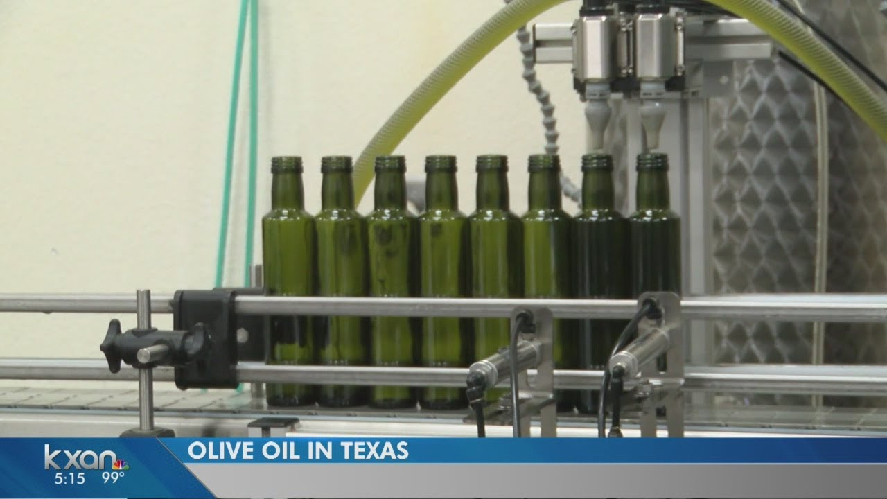 Texas tries to grow olive oil industry