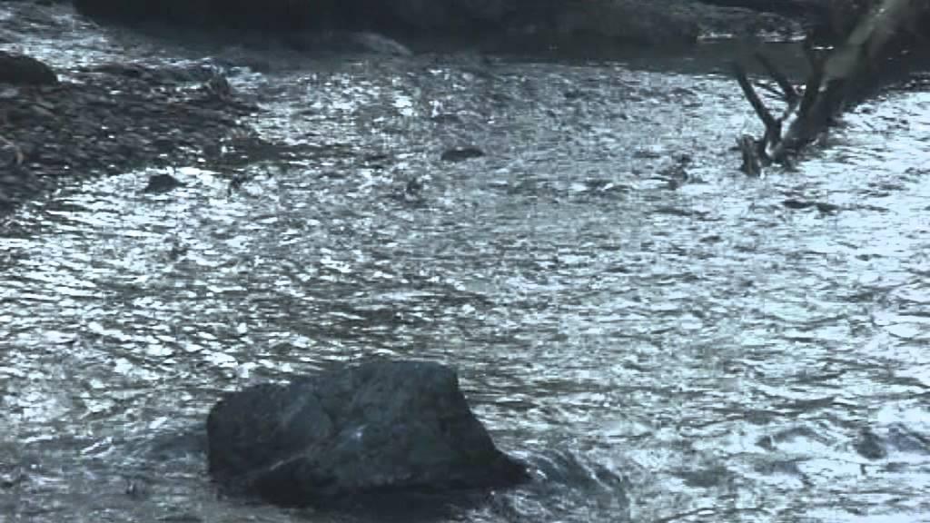 Сахалин,  нерест и вылов горбуши - сентябрь 2012.vob