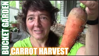 Awesome Carrot Harvest From The Bucket Garden | Container Gardening