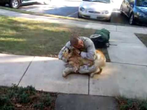 Dog Freaks Out Over Soldier's Return