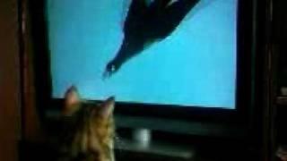 кошки тоже смотрят телевизор