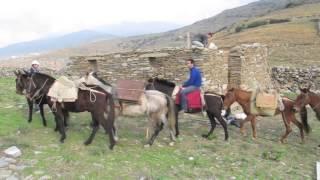 Pack horses and mules at Zagora