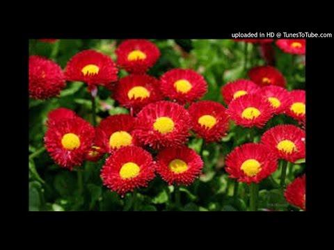 Lagu Batak : Rita Butar Butar ....  Gokhon Dohot Jou Jou  Mp3