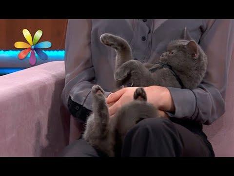 Вопрос: Как отучить кота лазить по за навескам?