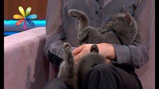Как отучить кота воровать со стола – Все буде добре. Выпуск 1122 от 14.11.17