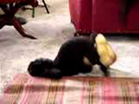 Tiersex - notgeiler Pudel bummst Stofftier - YouTube
