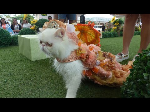 Pet Fashion Show In Philippenes