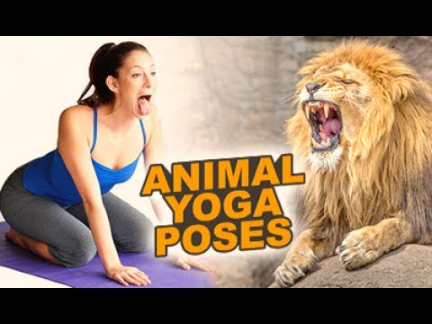 7 yoga animal poses  chillx  youtube