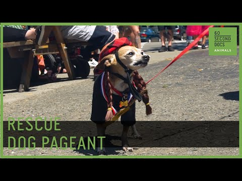 The Rescue Dog Pageant Benefiting Homeless Dogs