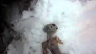 Michael Cohen UFO report: Dead alien found in UFO hotspot, Russia