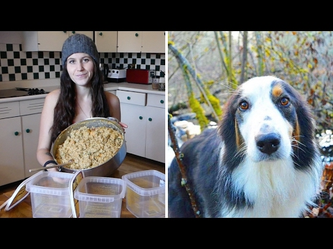 My Go To Vegan Dog Food Recipe